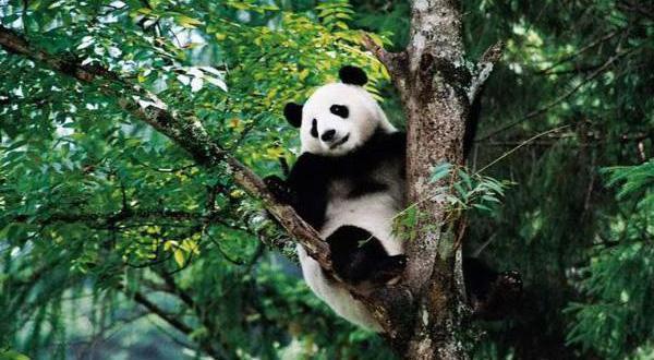 成都、熊猫基地、黄龙溪古镇双动3日半自由行