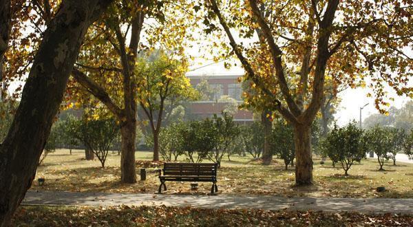橘子洲景区一角图