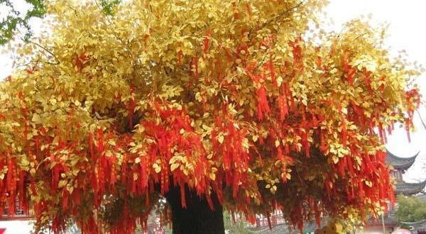 南京、扬州、婺源- A 黄山/B千岛湖-西递-木坑竹海-石林-老街专列七日游