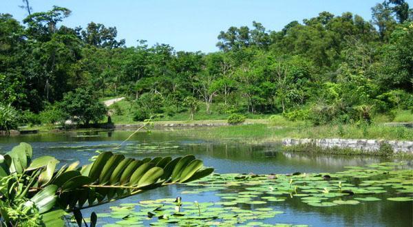 西双版纳热带植物园景观图