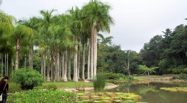 西双版纳热带植物园景观欣赏图
