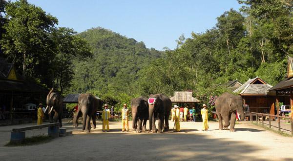 野象谷大象