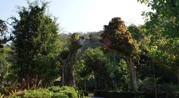 野象谷景观