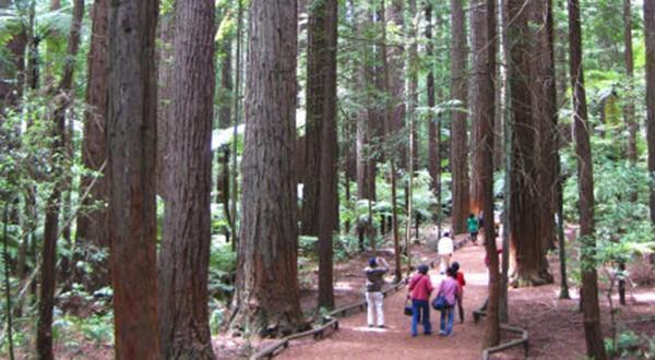 步入森林的怀抱