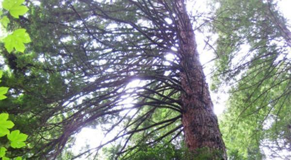 挺拔豪壮的大树