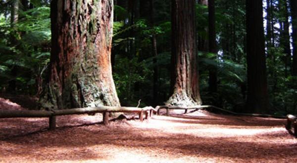 地上也都是红红的树皮
