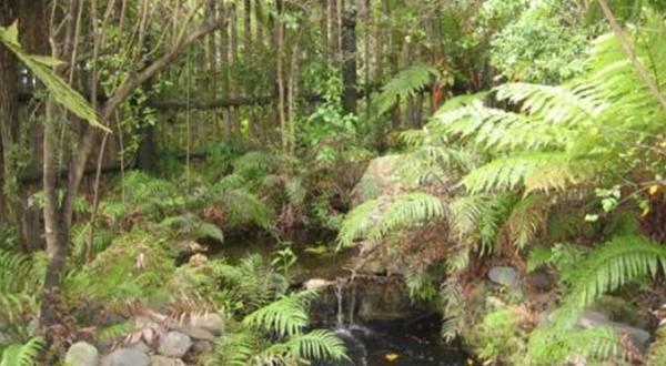 红木森林一景