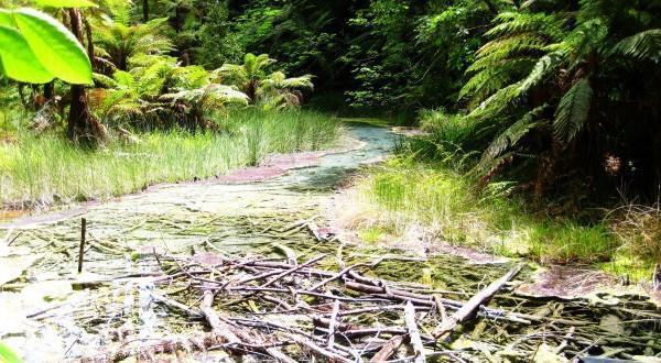 林中小溪与枯枝