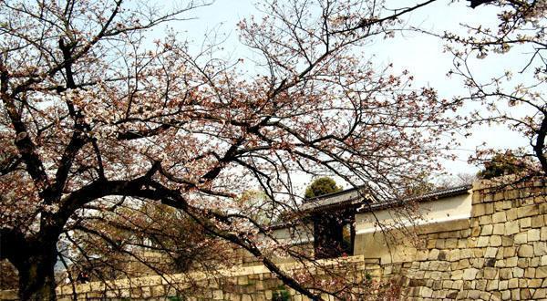 乐享日本本州半自助游记7日游