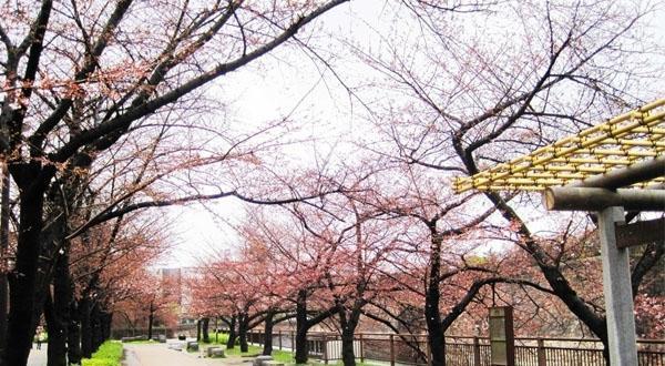 悦享日本-本州双温泉8日游