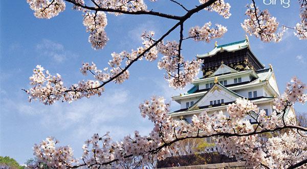 富士山白樱花图