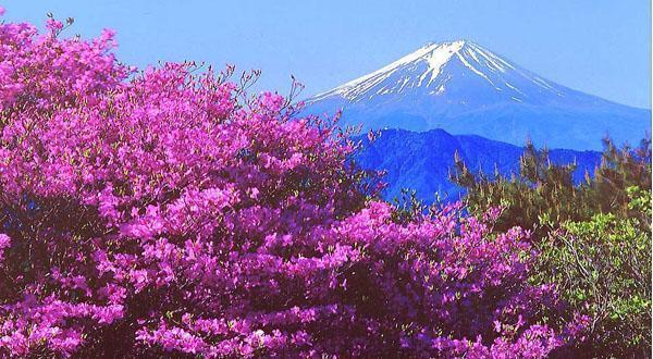 富士山风景图