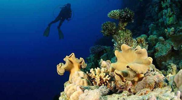 红海海底奇观