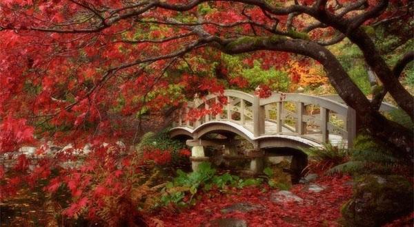 日本本州乐享深度7日游赏樱