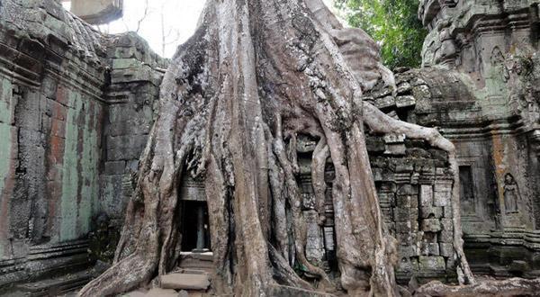 塔普伦寺树包庙百年老树根部