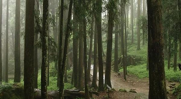 阿里山国家森林内