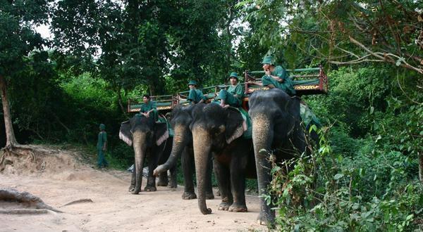 巴肯山大象