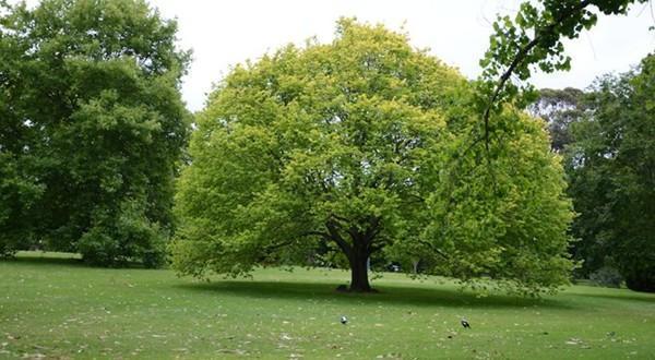皇家植物园树木