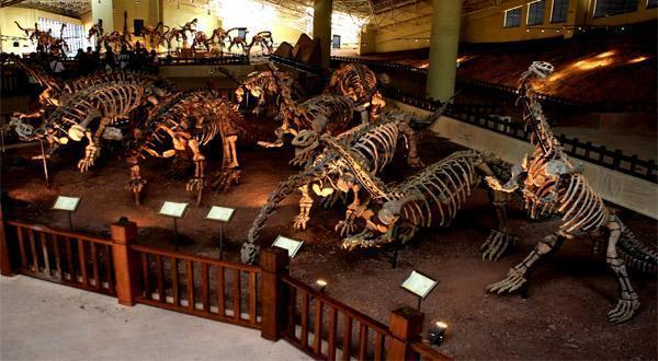 世界恐龙谷化石