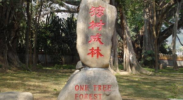 独树成林碑