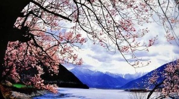 心灵之旅-西藏桃花节布达拉宫、大昭寺雅鲁藏布大峡谷去卧回飞8日游