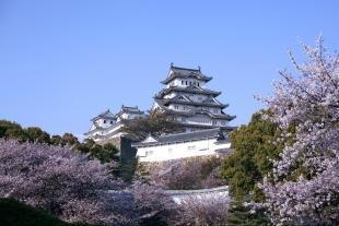 日本深度体验——东京、大阪、京都、富士山、箱根、奈良、白川乡全景深度8日游(包机直飞、一站直达)
