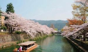 【日本包机直飞】东京、大阪、京都、富士山、箱根全景8日游(包机直飞、一站直达)