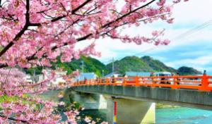 礼遇·迷失樱花季日本本州环岛超值8日游