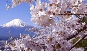 樱花季·日本本州环岛超值8日游