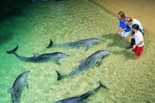 众悦 全景揽胜 海陆空澳新海豚岛11日