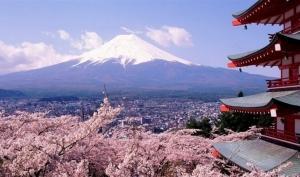 花漾至美-日本本州双温泉伊豆8日游