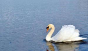 三门峡天鹅湖·黄河游轮·地坑院一日