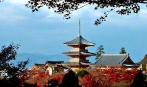 【秋枫】惠游本州8日深度游