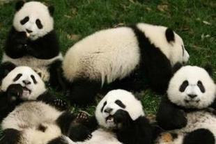 佛坪熊猫谷森林公园一日游