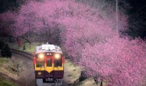 川航阪静:日本本州乐行东瀛三古都深度7日枫叶之旅