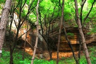 黄陵轩辕养生谷森林公园一日游