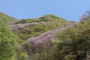【暖春出游】太平森林公园+紫荆花海休闲一日